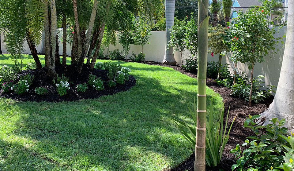 Landscape design and installation in the backyard of a home located in Siesta Key, FL.