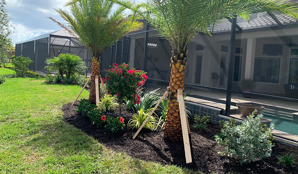 Landscaping around a pool that includes a new palm tree and flowers at a home in Casey Key, FL.
