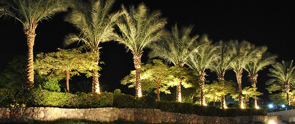 Large palm trees with accent and up lighting at an estate in Sarasota, FL.
